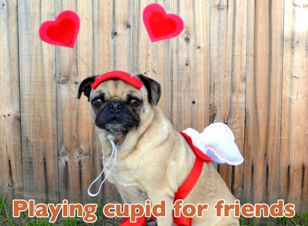 valentines-dogs8
