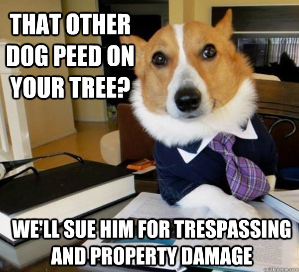 Lawyer Dog Meme (4)