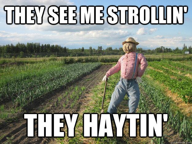 Scarecrow Farmer Meme (3)