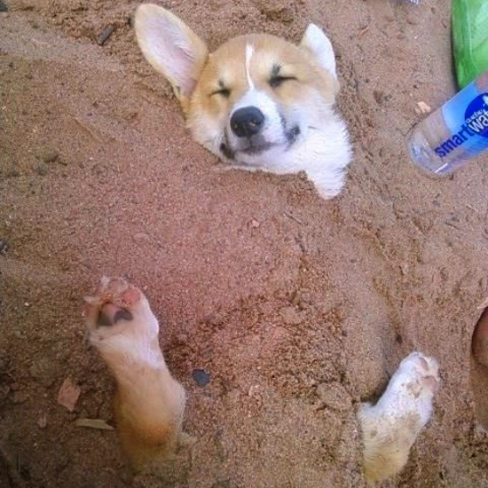 25 Places Corgis Don't Belong (12)