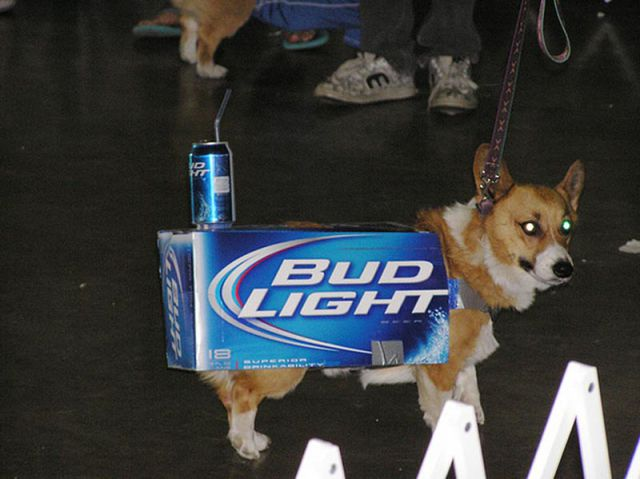 25 Places Corgis Don't Belong (9)