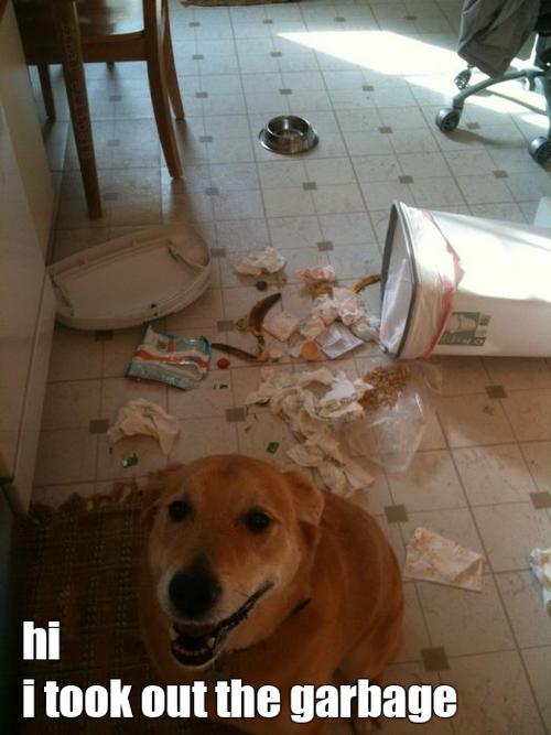Funny Pic Dump (15)