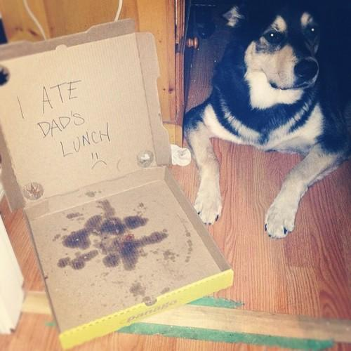 Pics Photos   20 Bad Dogs Being Shamed With Signs bX3wz7sf