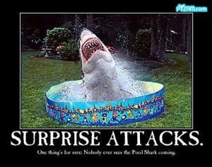 Shark Week Funny (15)