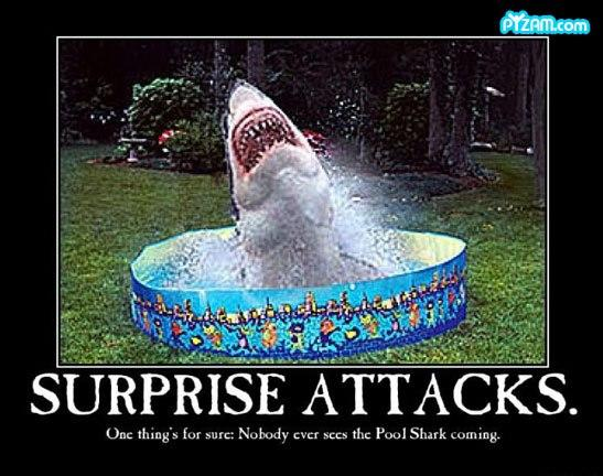 Shark Week Funny (15)