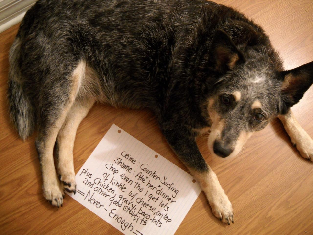 20 Bad Dogs Being Shamed With Signs 07DvzXCT