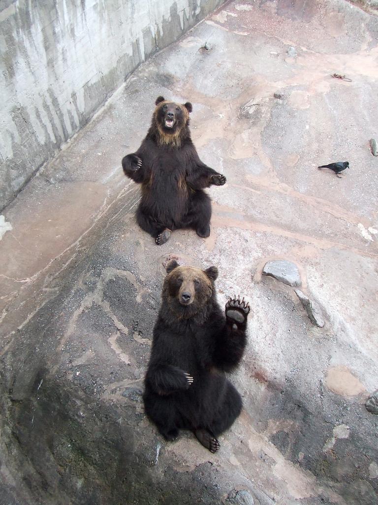 Lol Bear 20 LOL Animals (11.24....