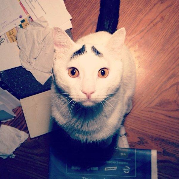 sam-the-cat-with-eyebrows-3