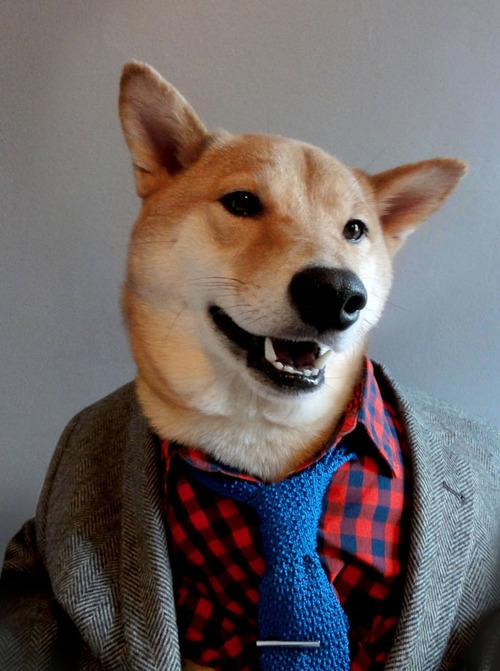 Menswear Dog (2)