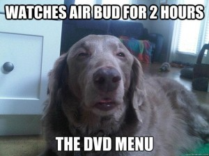 Really High Dog Meme (2)