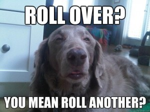 Really High Dog Meme (11)