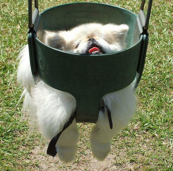 Dj Booth For Sale >> 23 Places Pomeranians Don't Belong | Pleated Jeans
