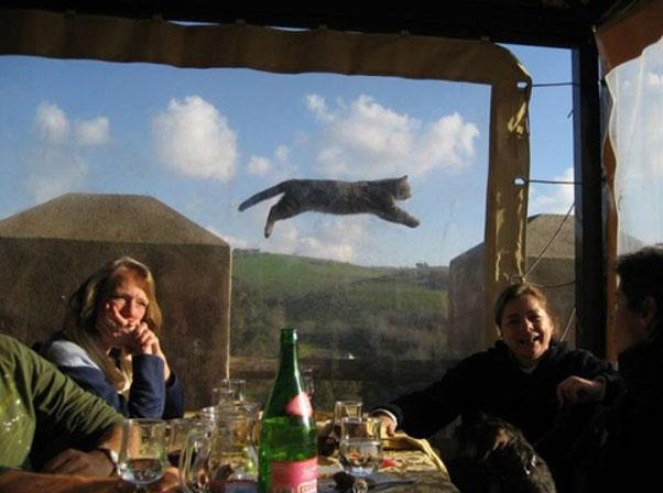 The Funniest Animal Photobombs Of All Time Page Of - The 39 funniest animal photobombs of all time