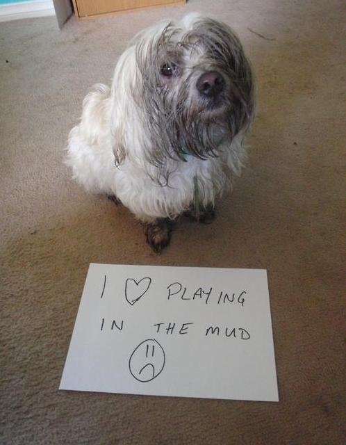 Friday Funny: Dog Owners Will Understand (20 Pics)