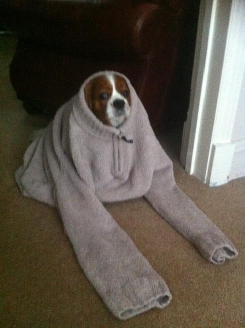Big Dog Wearing Sweater 20 LOL Animal P...