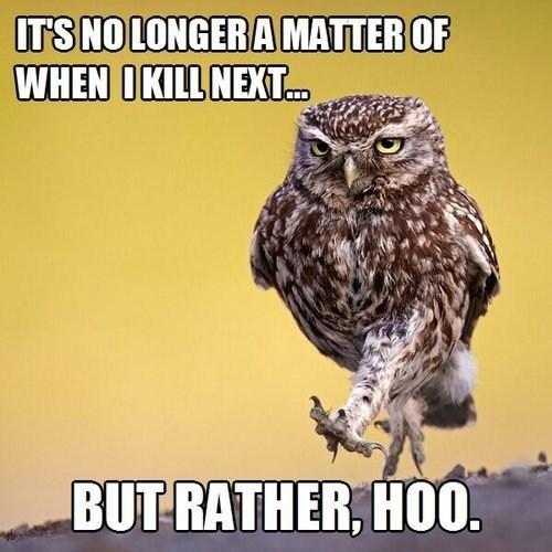 owl humor reading - photo #20