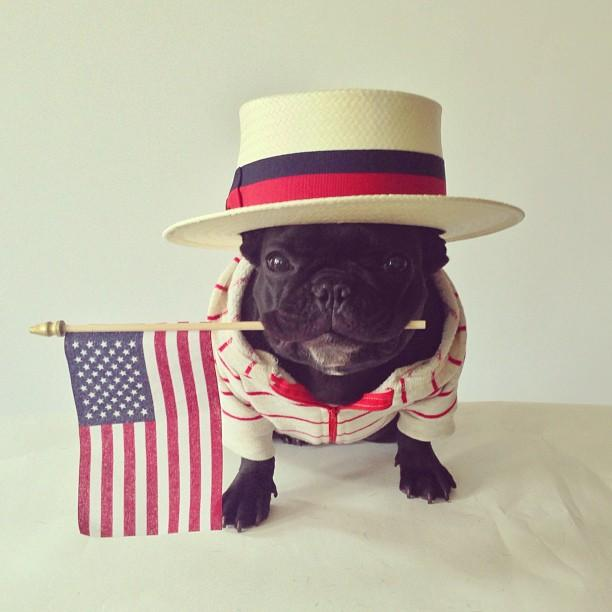 May The Fourth Be With You French: Meet Trotter: The French Bulldog That Loves Playing Dress