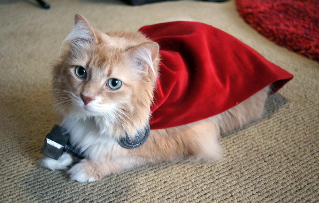 Here S A Cat Dressed Up Like Thor 6 Pics Pleated Jeans