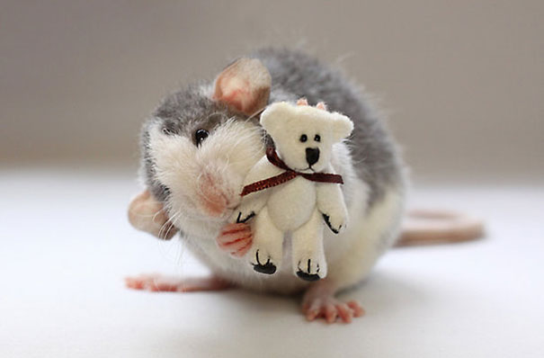 Pet Rats Posing With Teddy Bears Is Way Cuter Than You D