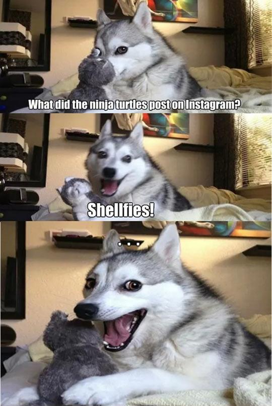 Funny Dog Joke Meme : Puns that are so bad they re good pleated jeans
