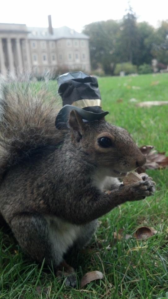 Sneezy The Squirrel Loves Wearing Hats 15 Pics Pleated