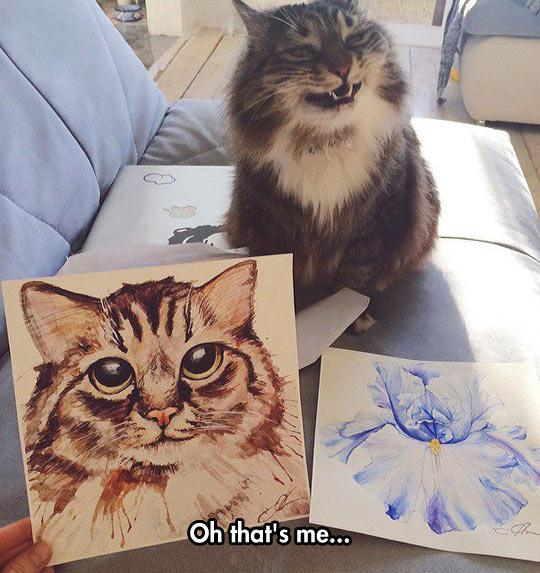 Videos How To Draw Cats