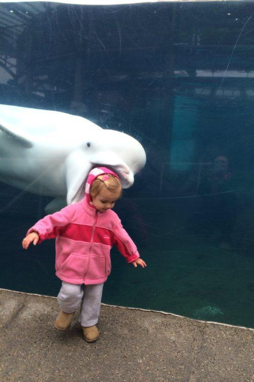 Funny Pic Dump 8 26 15: 24 Perfectly Timed Animal Photobombs