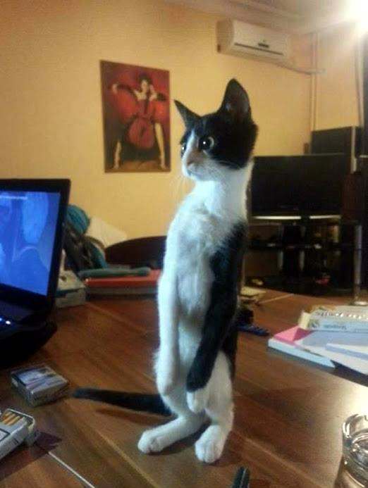 H5MGqZp 1 28 cats standing on their hind legs pleated jeans