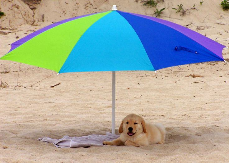 24 Dogs That Are Absolutely Ready For Summer