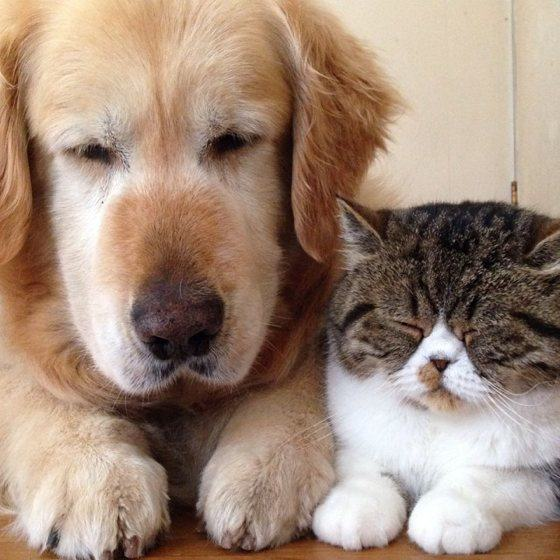 Cat And Dog Best Friends Buzzfeed
