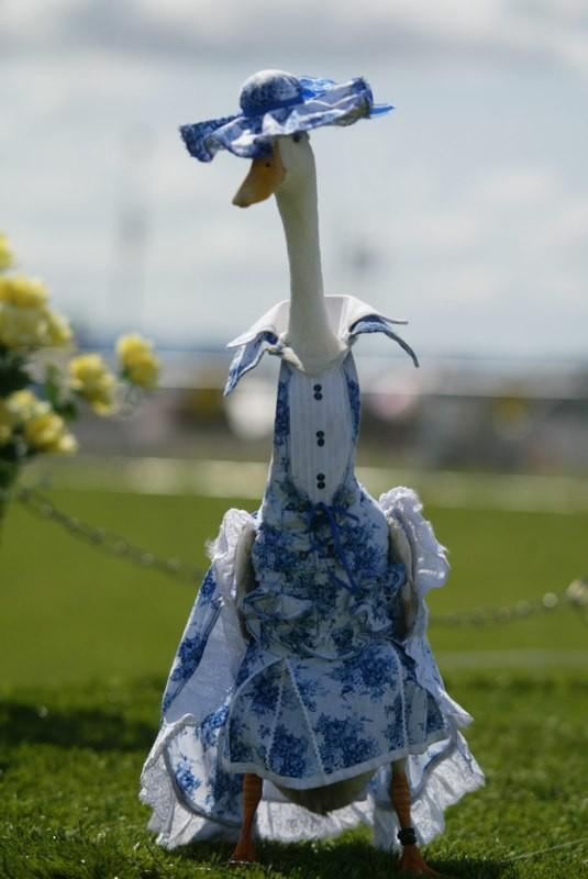 Australian Duck Fashion Show
