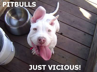 Image result for funny pictures of pitbulls