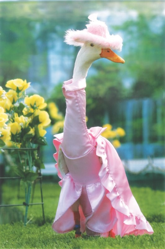 Farmer Dresses Up Ducks For Elaborate Fashion Show