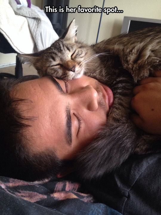 Cats Sleeping In Owner S Bed