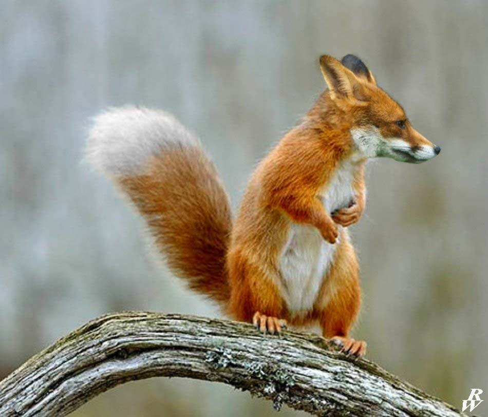 21 animal hybrids that are horrifyingly hilarious