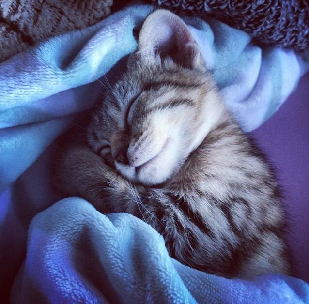 21 Adorable Tucked in ...