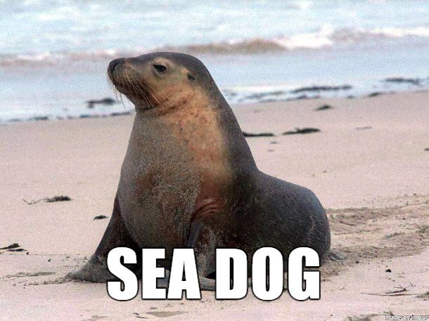 Here are some german words for animals literally - Funny animal pictures with words ...