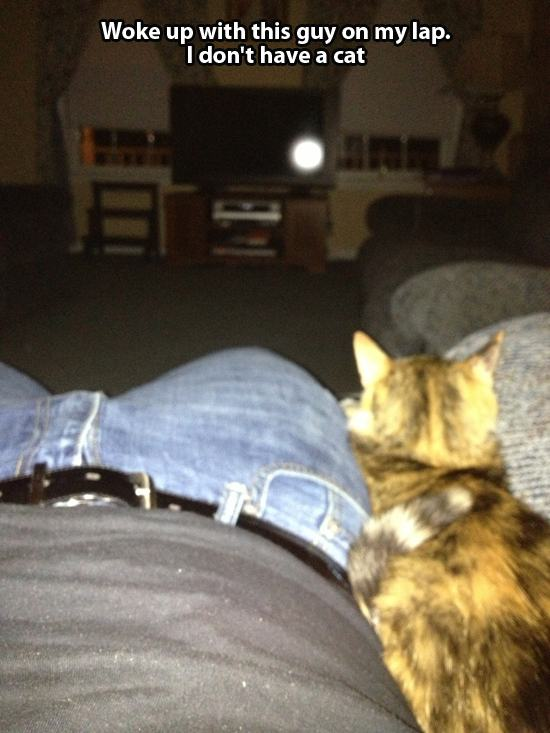 this is not my cat 24 pics pleated jeans