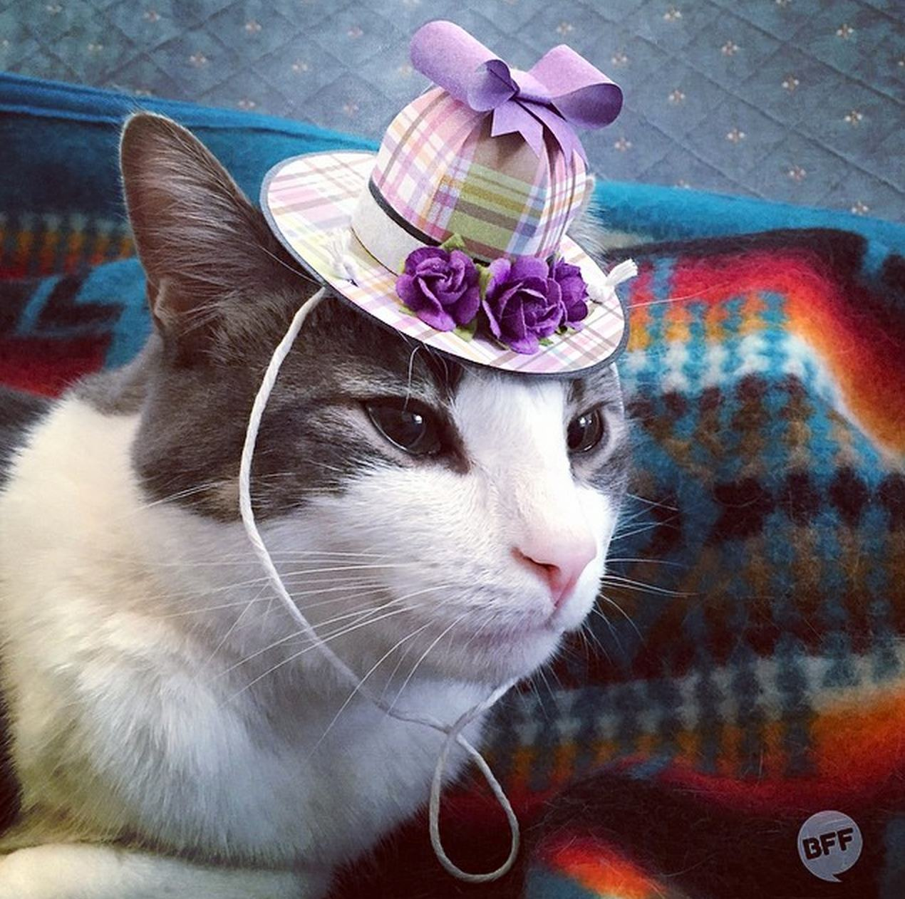 Tiny Hats On Cats Is Your New Favorite Instagram Account