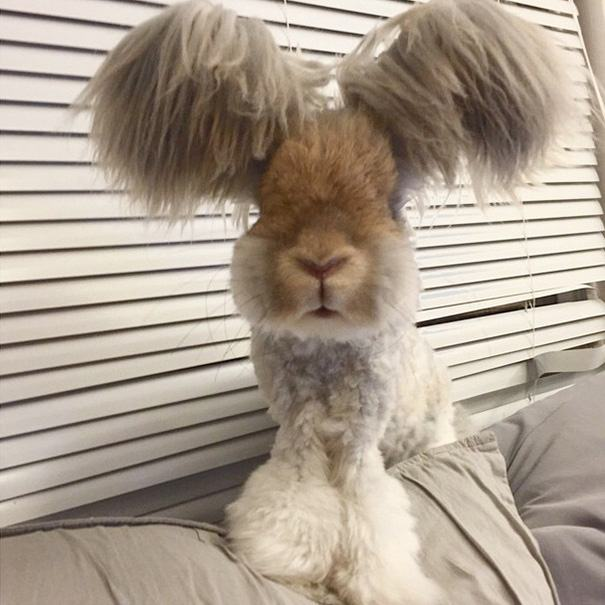 Meet Wally The Bunny That Looks Like He Has Wings For
