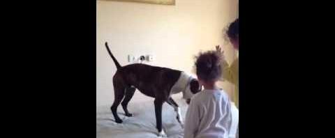 Little Girls Teach Dog to Jump on Mattress