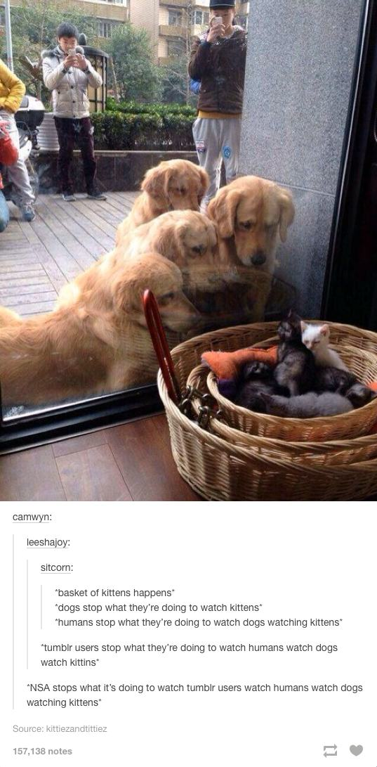 Weird Funny Pictures Tumblr