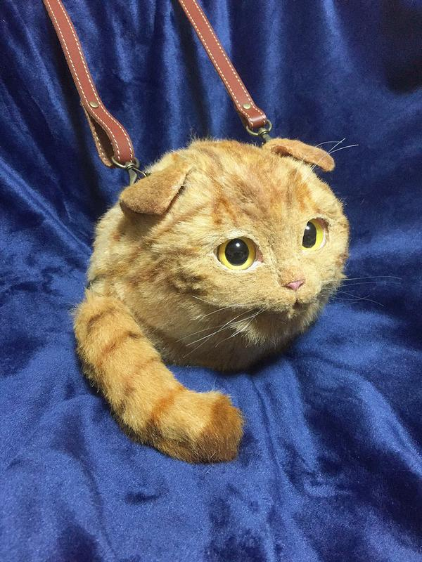 Extremely Funny Videos Cats