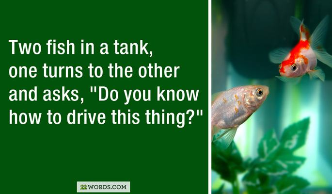 29 terrible jokes that only a dad could love pleated jeans for 10 fish are in a tank riddle answer