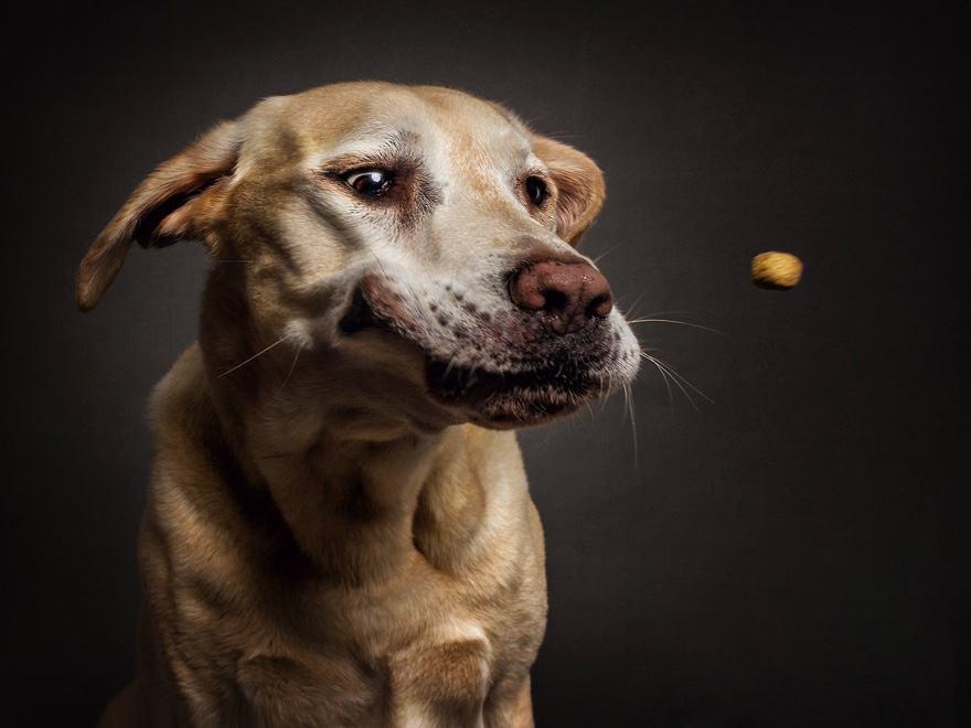 Dog Catching Treats Photographer