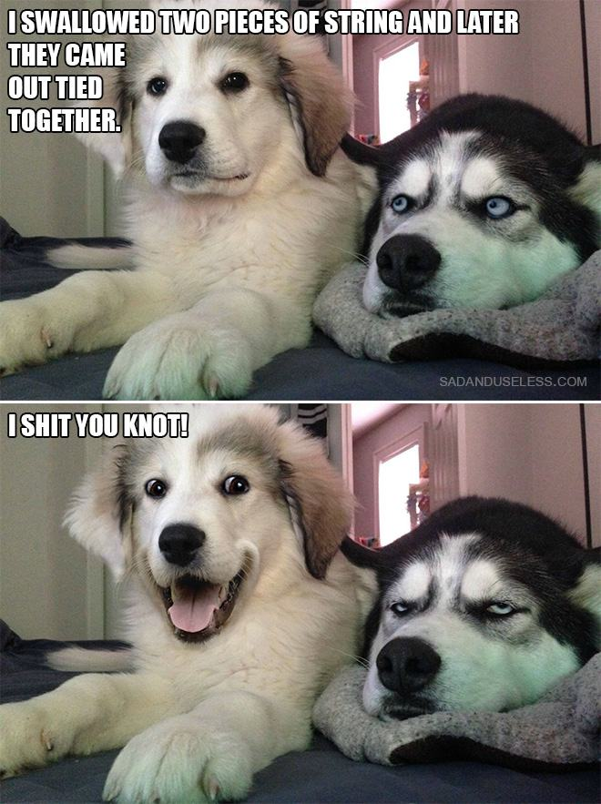 Image of: Funny Puns Share 10 Bad Puns From The bad Pun Dog Pleated Jeans